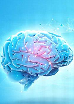 Работает мозг